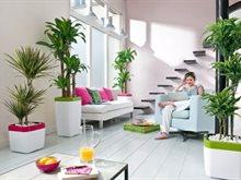 الألوان التي تجلب الطاقة والروح الايجابية داخل المنزل