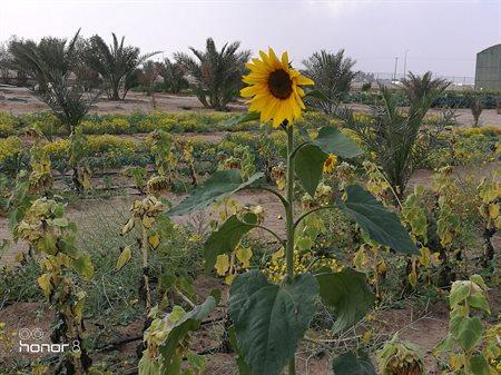 Photos ... Great Day at Sadeer Farms in Abdali