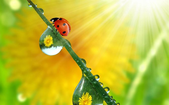 Beautiful and colorful Lady bird wallpapers