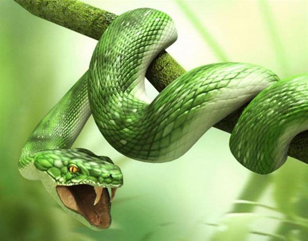 تفسير رؤية الثعبان او الافعى في المنام
