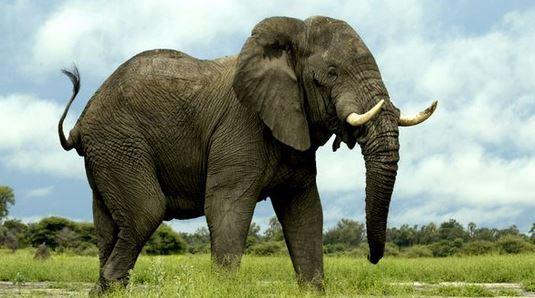 ماذا تعني رؤية الفيل في المنام؟