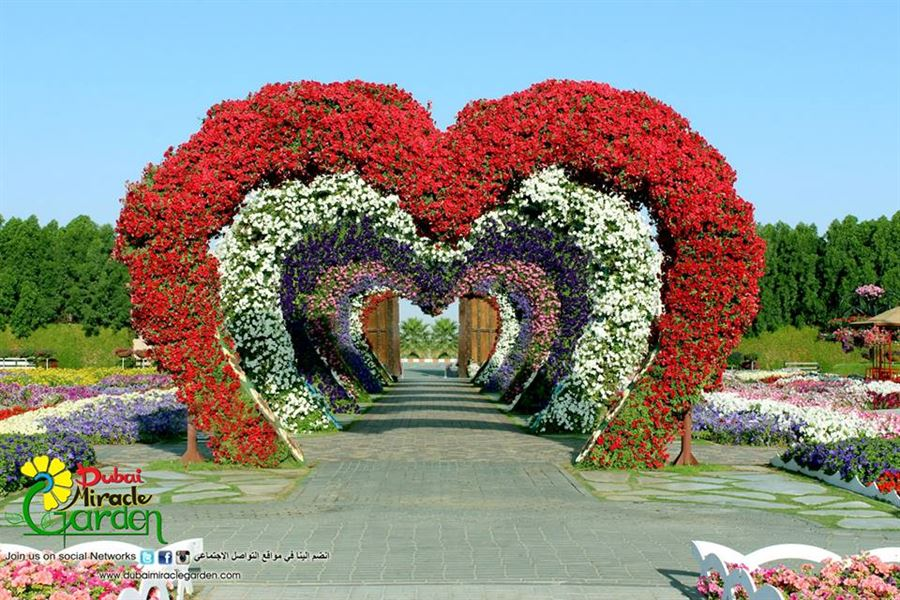 Photos Of Dubai Miracle Garden Website