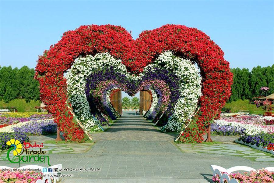 Photos of dubai miracle garden website for Home garden design dubai
