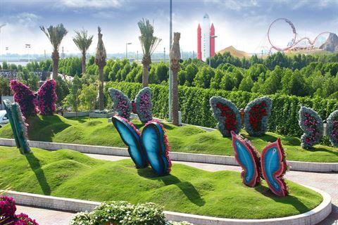 Photo 13174 on date 15 November 2015 - Dubai Miracle Garden - UAE