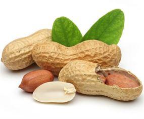 تناول الفول السوداني يحمي الأطفال من الإصابة بالحساسية