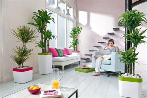 الألون التي تجلب الطاقة الايجابية في المنزل