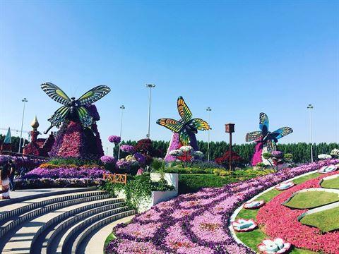 Photo 30066 on date 17 December 2016 - Dubai Miracle Garden - UAE