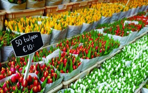 Flower Market in Amsterdam - Netherlands