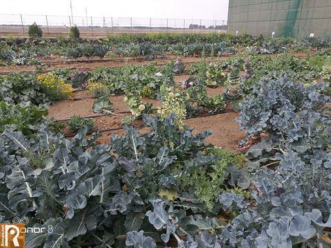 بالصور ... يومنا المميز في مزرعة سدير في العبدلي
