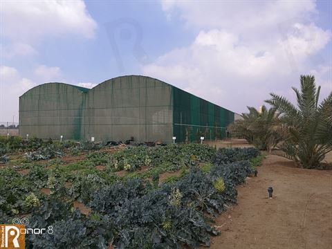 Photos ... Great Day at Sadeer Farms in Abdali