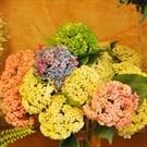 Malaysia Flowers - Tyre, Lebanon