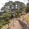 Cedars of God - Bcharreh, Lebanon