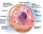 جميع أجسام الكائنات الحية (إنسان، حيوان، ونبات) تتكون من الخلايا.