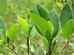 تتنفس النباتات في الضوء غاز ثاني أوكسيد الكربون وتنتج الأوكسجين.